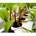 Основное руководство по pH и EC и как они влияют на растения