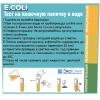 ECOWQecoli.jpg